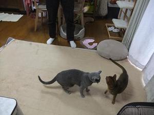 Tokyo_0102cat