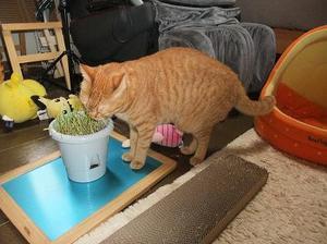 Cat_006kusa14