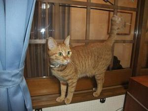 Cat_018mado14