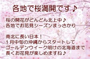 2014sakura_2