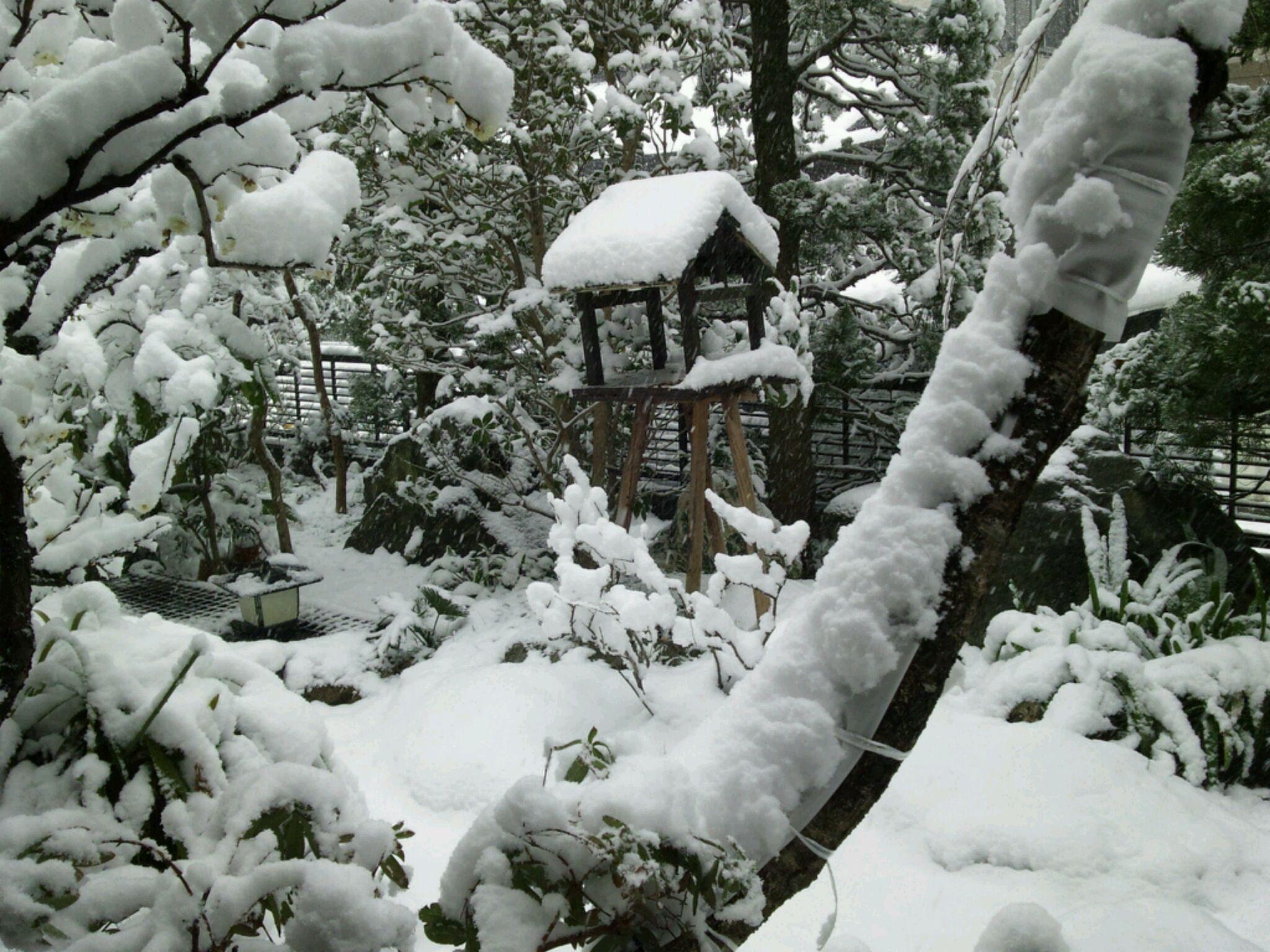 東京は45年ぶりの大雪でした。
